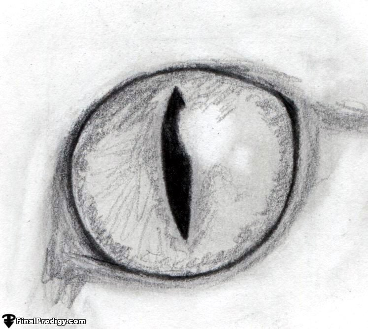 How to Draw a Cat Eye - FinalProdigy.com