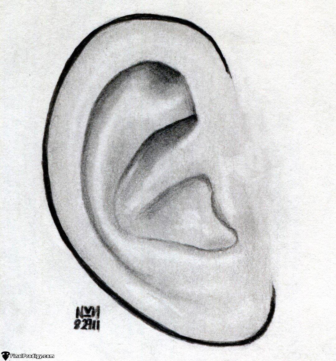 Картинки ухо карандашом