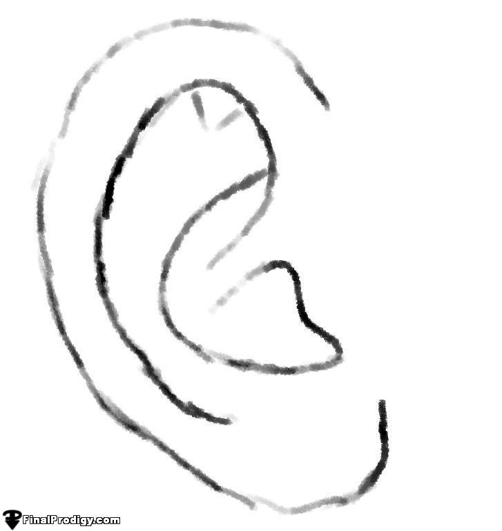 How to Sketch an Ear - FinalProdigy.com Ear Sketches
