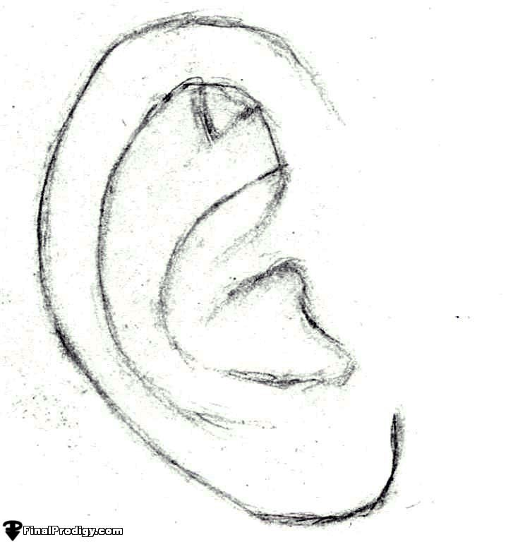Image Gallery ear sketch Ear Sketches