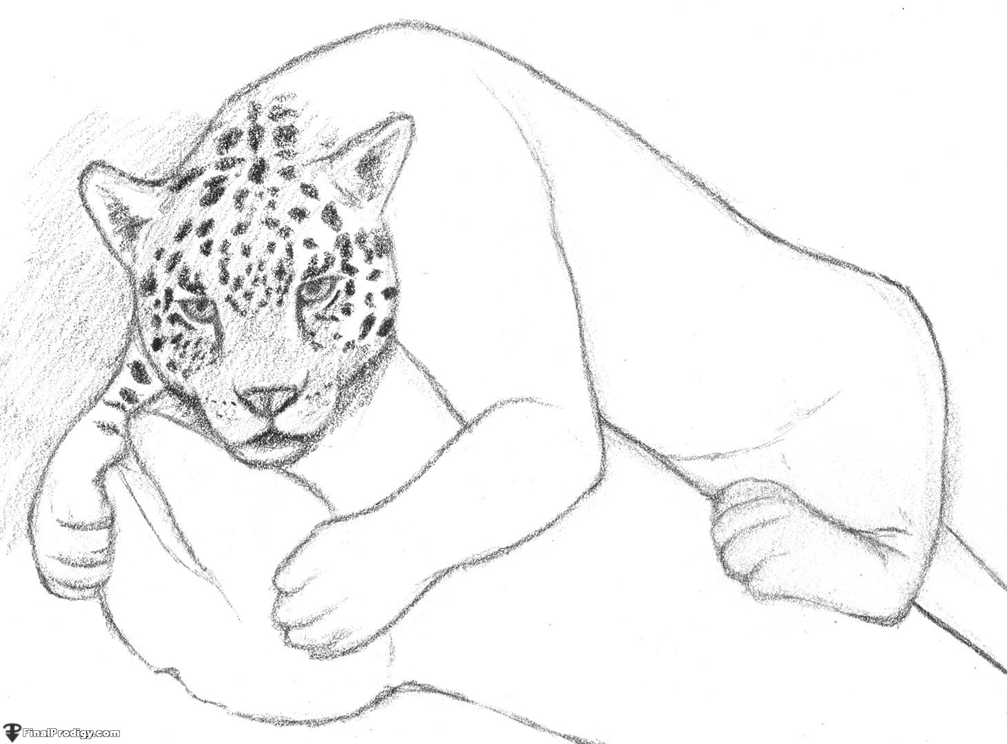 using a soft pencil 5b begin adding rough shading to the drawing start with the head try to make the jaguars spots look natural by not making the