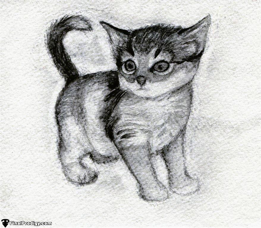 рисунки милых котят карандашом фото