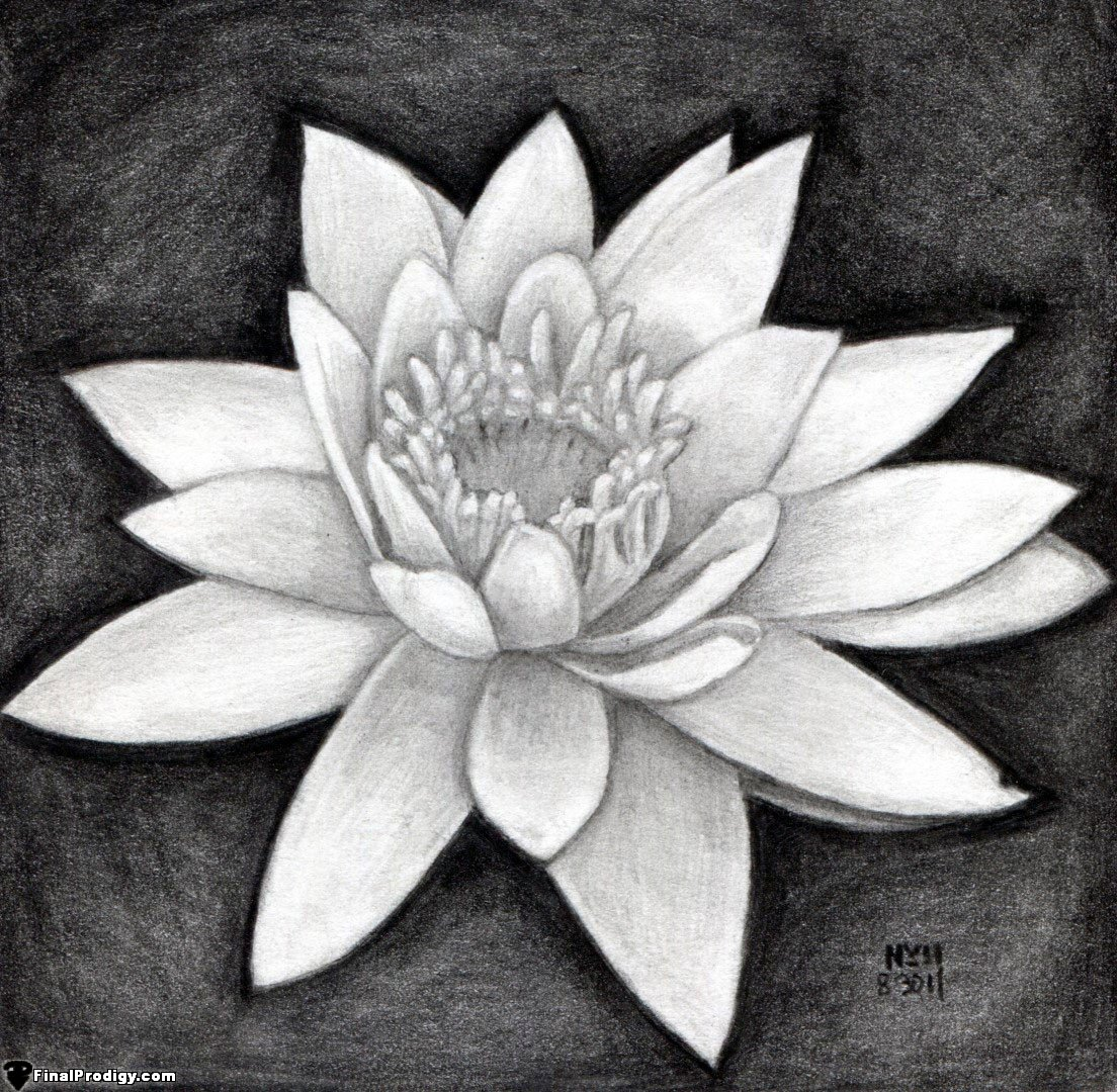 How To Draw A Water Lily Finalprodigy Com