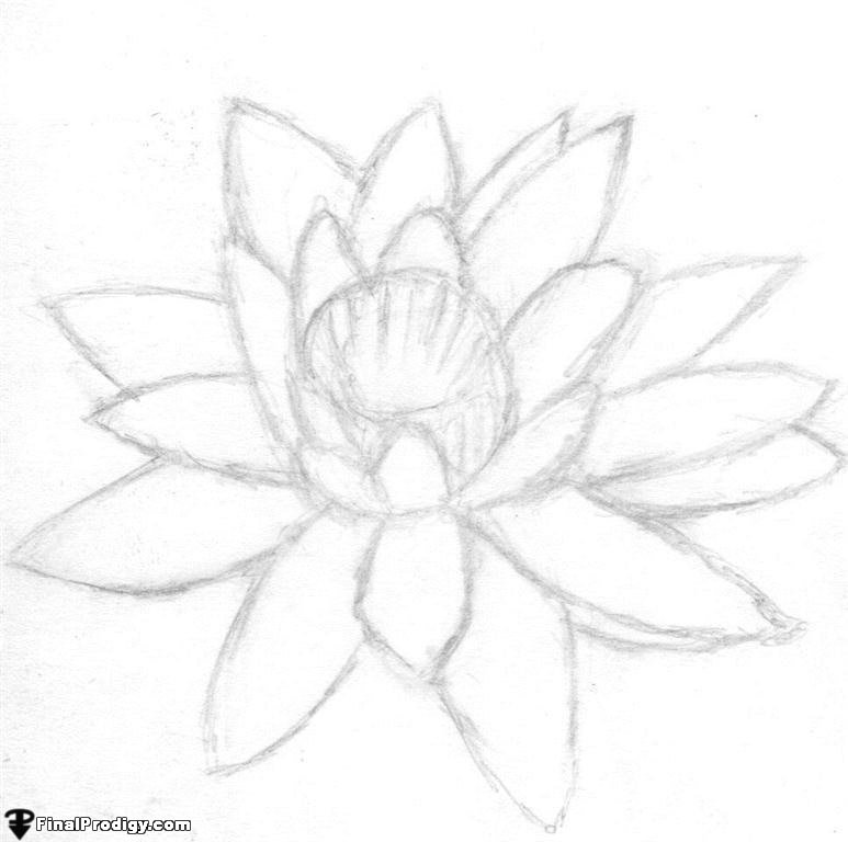 How to Draw a Water Lily - FinalProdigy.com