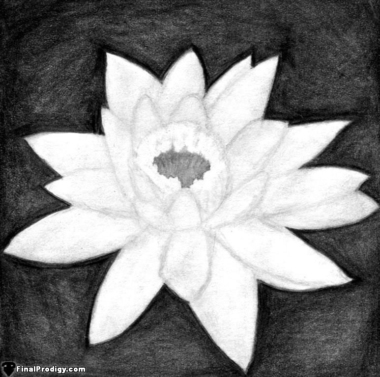 How to Draw a Water Lily - FinalProdigy com